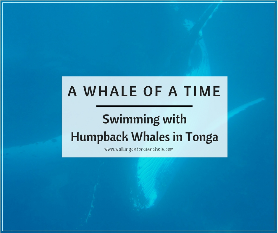 A Whale of a Time: Swimming With Humpback Whales in Tonga