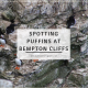 Spotting Puffins at Bempton Cliffs